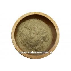 Opuntia (Nopal) polvere