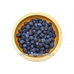 Prunus Spinosa Frutti