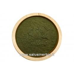 Gynostemma (Ginpent) polvere