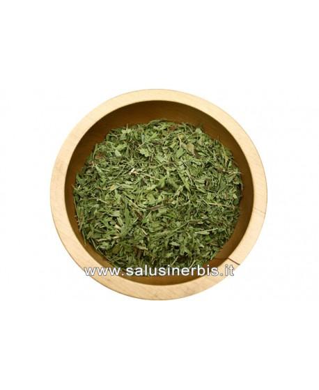 Stevia Foglie