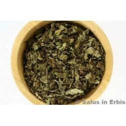 Orthosiphon foglie