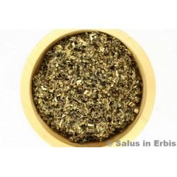 Artemisia volgare sommità